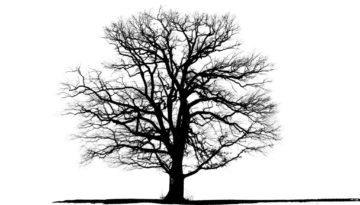 Bettina Lindenberg Postkarten schwarz-weiß Natur Fotokunst Kunstpostkarten, Deko, Eiche Bäume