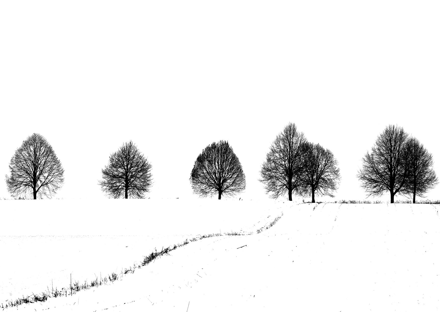 Bettina Lindenberg Postkarte sw Feld im Schnee