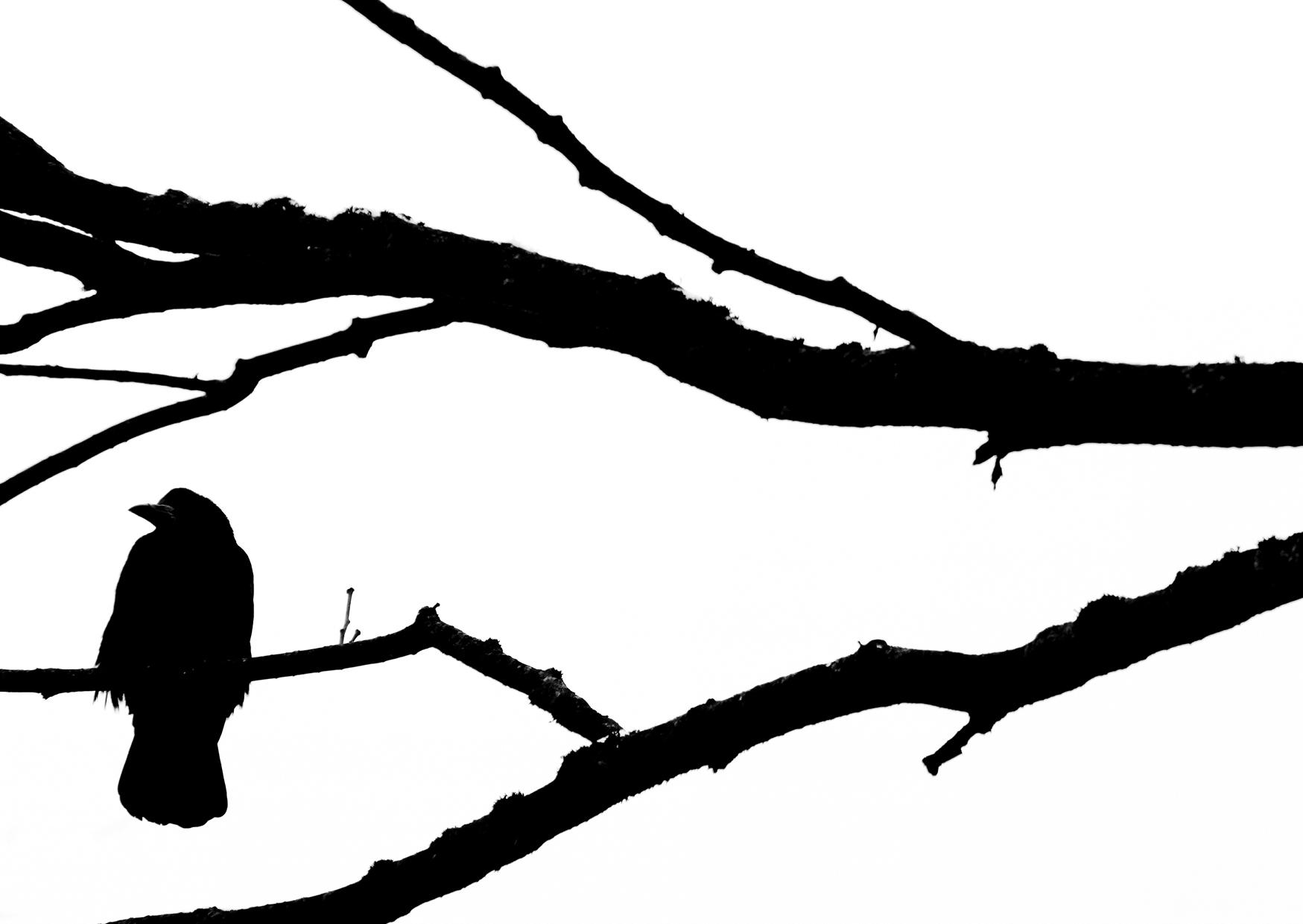 Bettina Lindenberg, Fotografie, Kunstpostkarte, Natur, schwarz-weiß