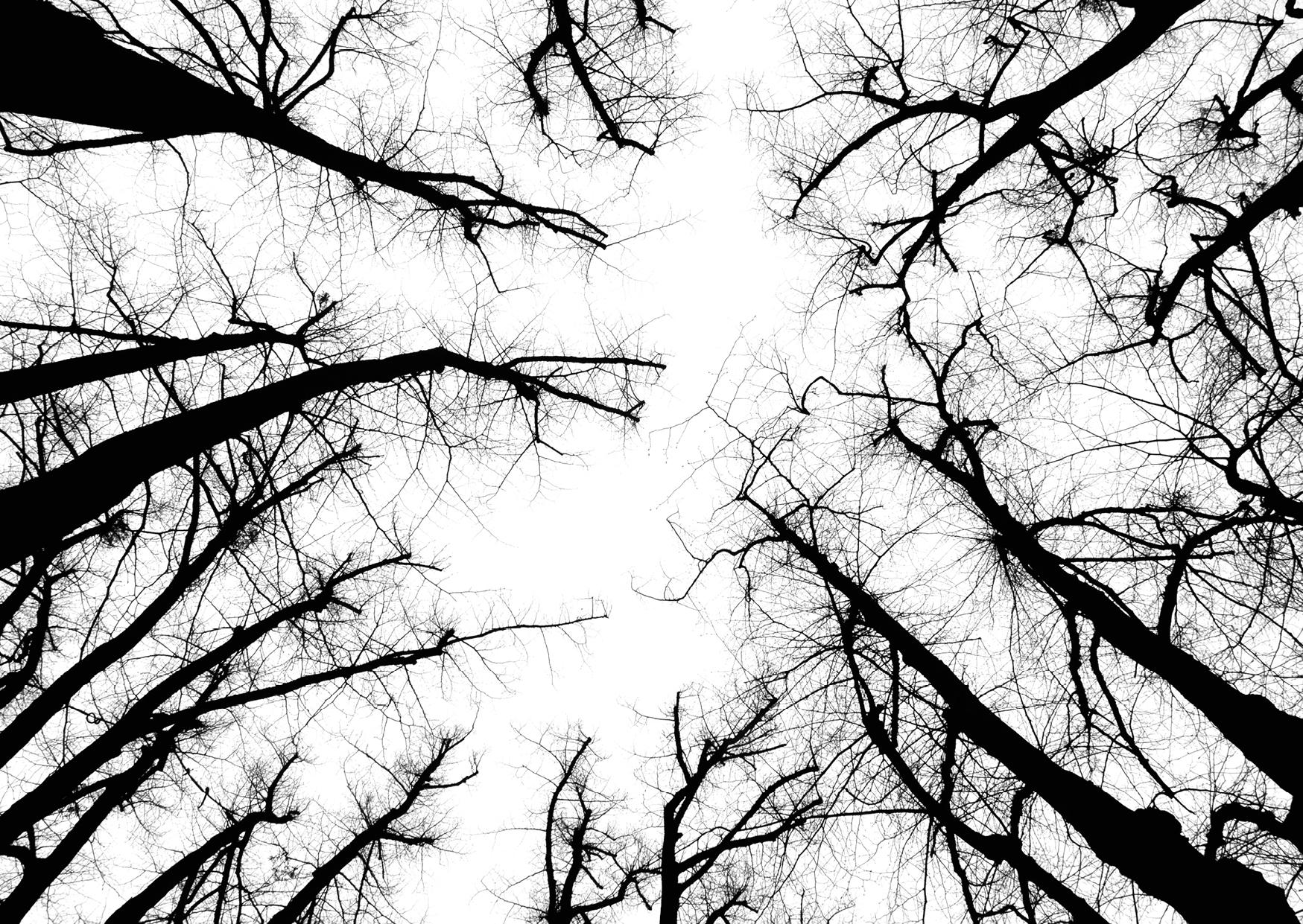 Bettina Lindenberg Postkarten schwarz-weiß Natur Fotokunst Kunstpostkarten, Deko, Bäume, Linden