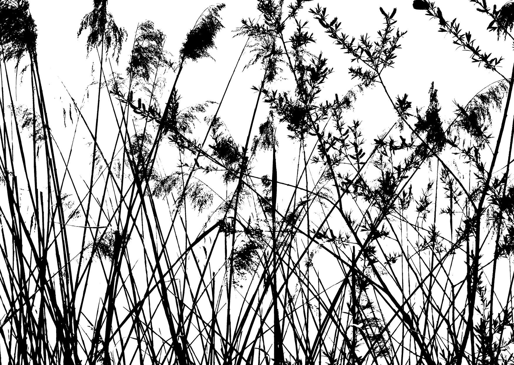 Bettina Lindenberg Postkarten schwarz-weiß Natur Fotokunst Kunstpostkarten, Deko, Wasser