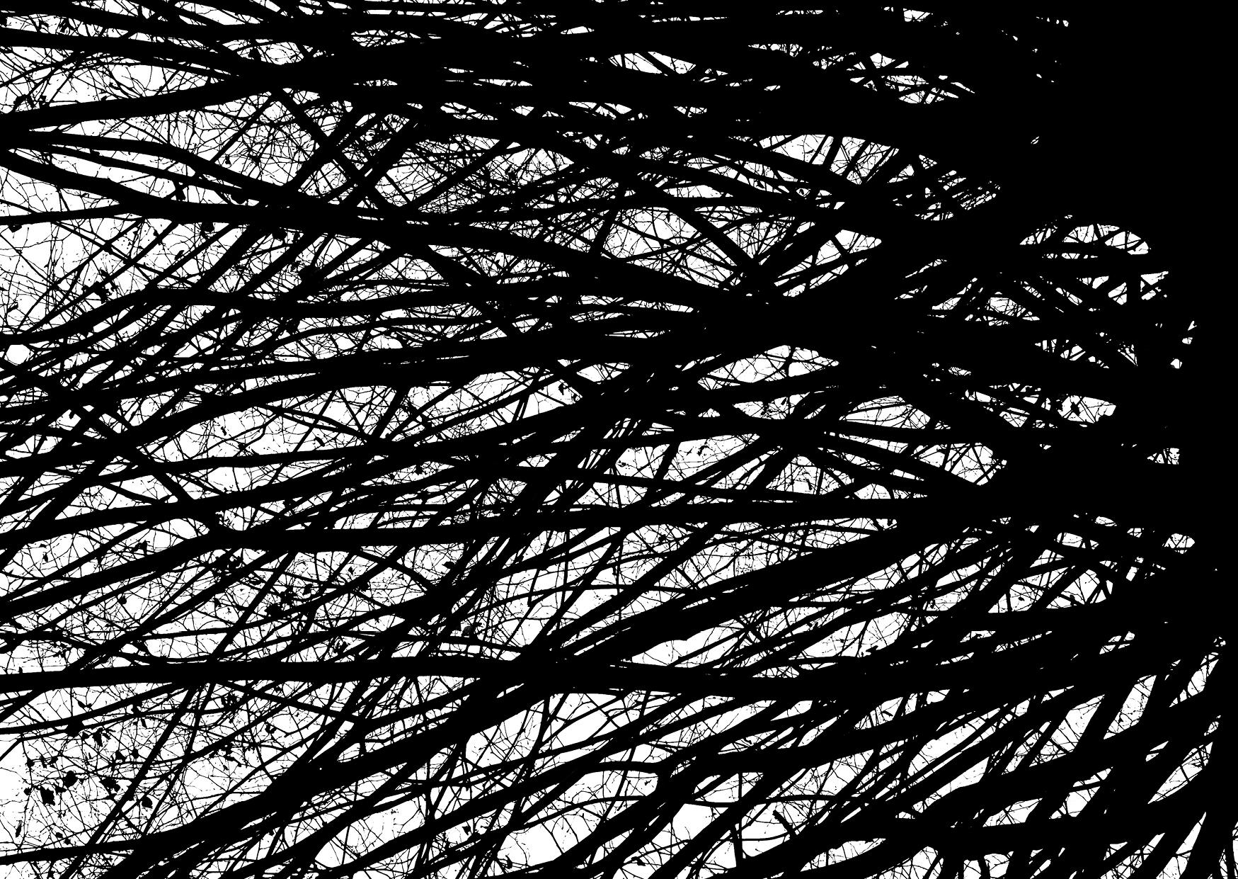 Bettina Lindenberg Postkarten schwarz-weiß Natur Fotokunst Kunstpostkarten, Deko, Bäume