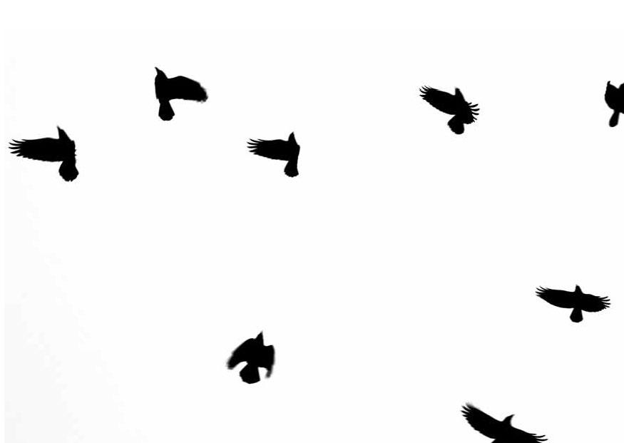 WildwuchsPostkartenSW-A6-2-flug-der-voegel-2_Seite_1
